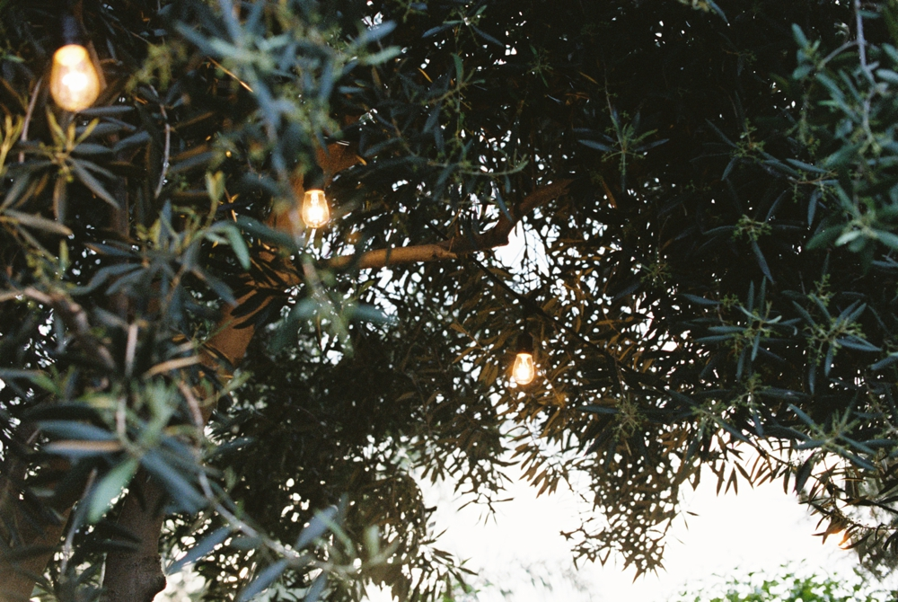 garden-string-lights-in-olive-tree