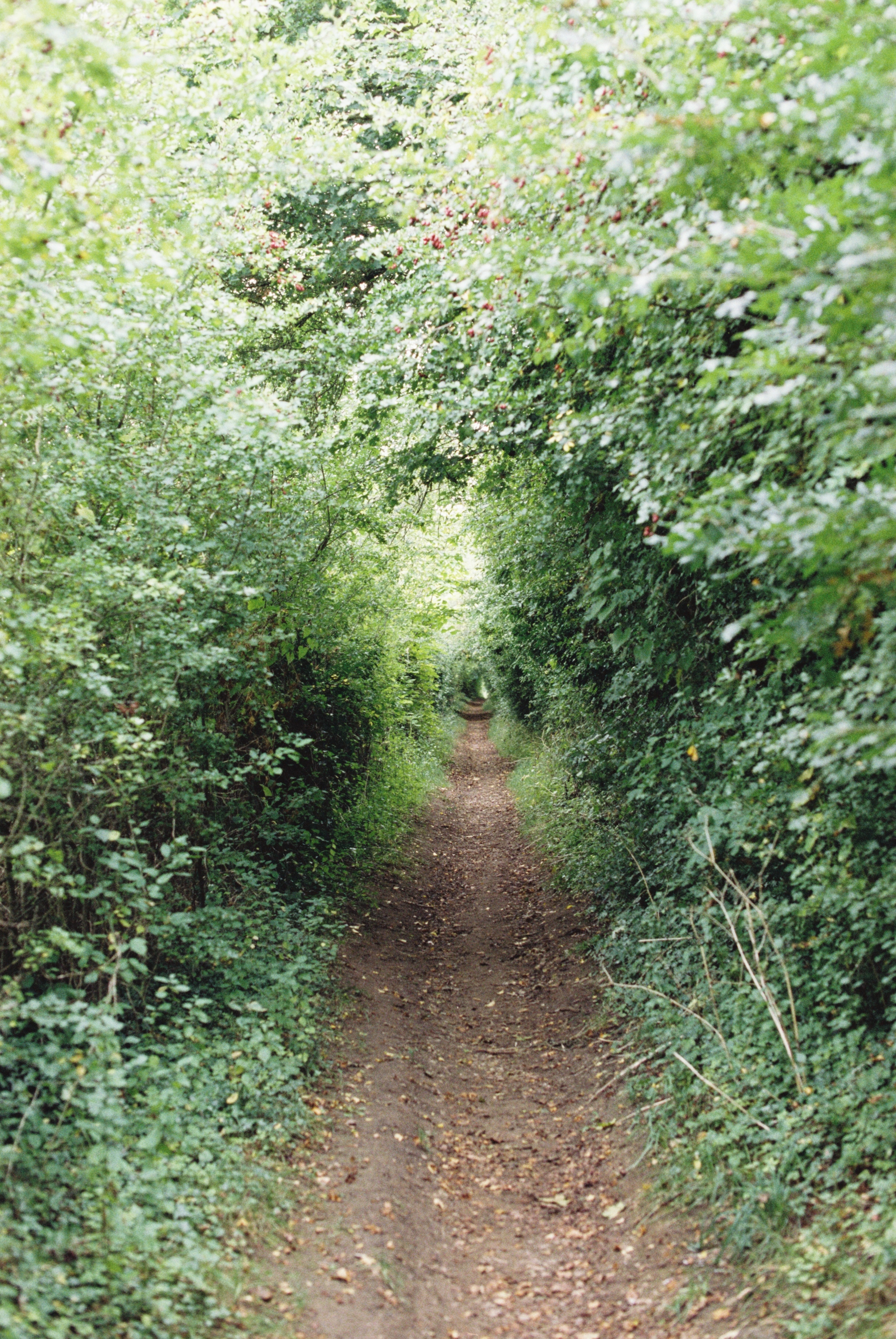 arched-tunnel-greenery-in-the-cotswolds